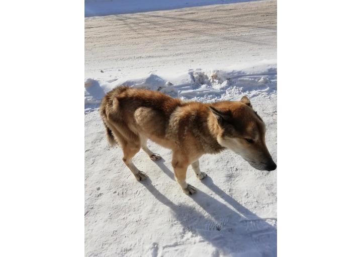 На углу Буденного и Ново-Полевой найден пес