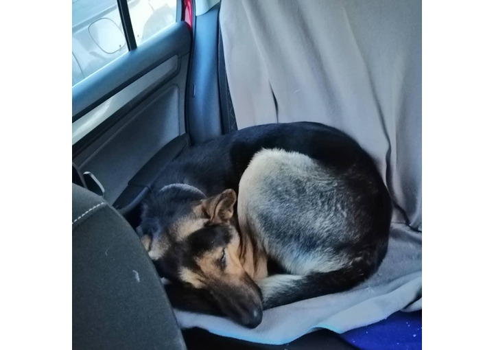 Москва! Коровинское шоссе, найден пес