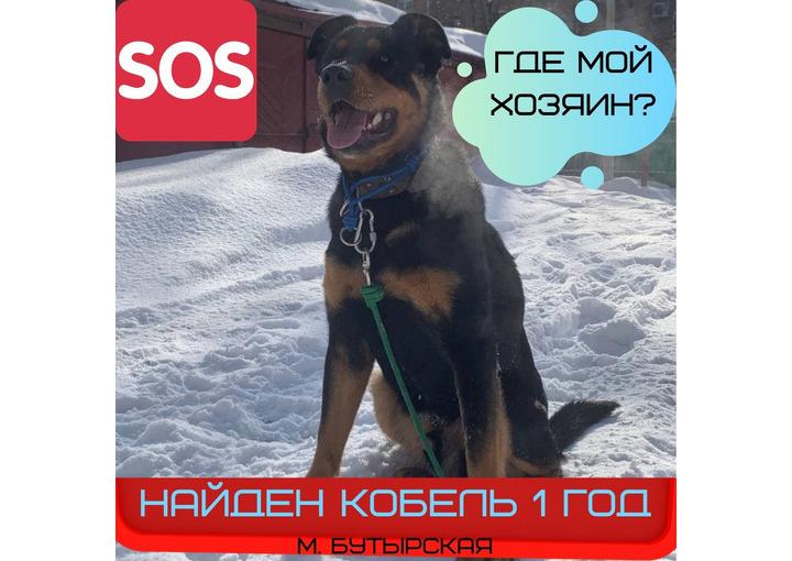 НАЙДЕНА собака во дворе дома по адресу Огродный проезд