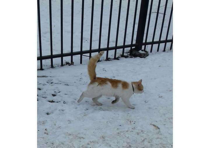 На пр. Ю. Гагарина был замечен рыжий кот