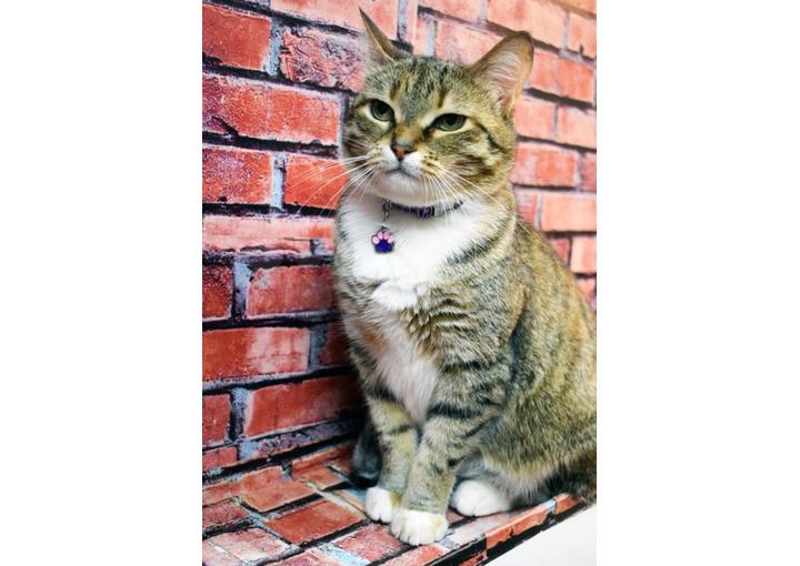 Отдам в добрые руки Молодая кошка Софи