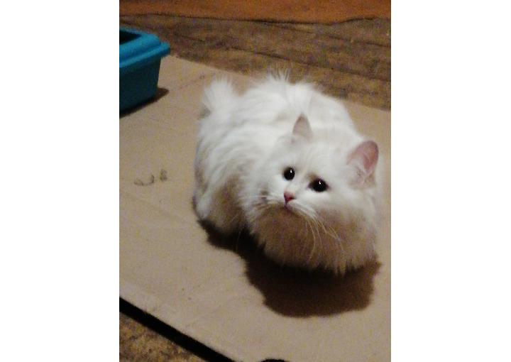 Кошка в добрые руки, около 6 месяцев