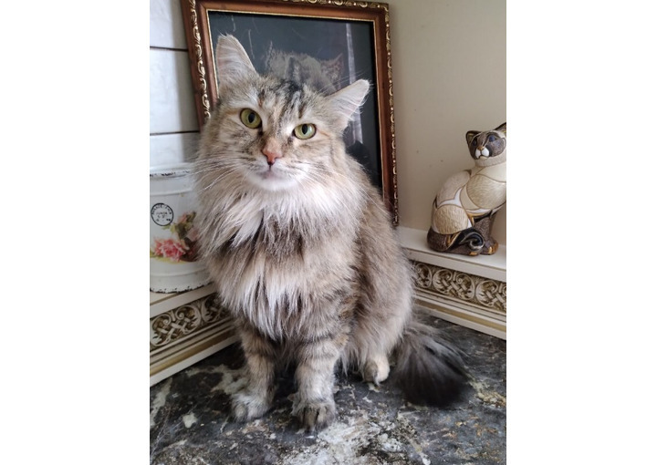 Кошечка Дорис. Возраст около 3-х лет