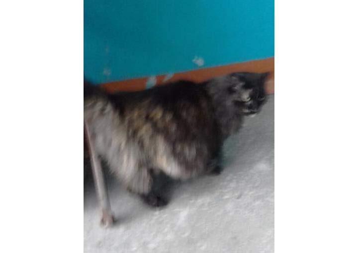 Подбросили с сильно беременную кошку,ласковую,бывшедомашнюю в подъезд