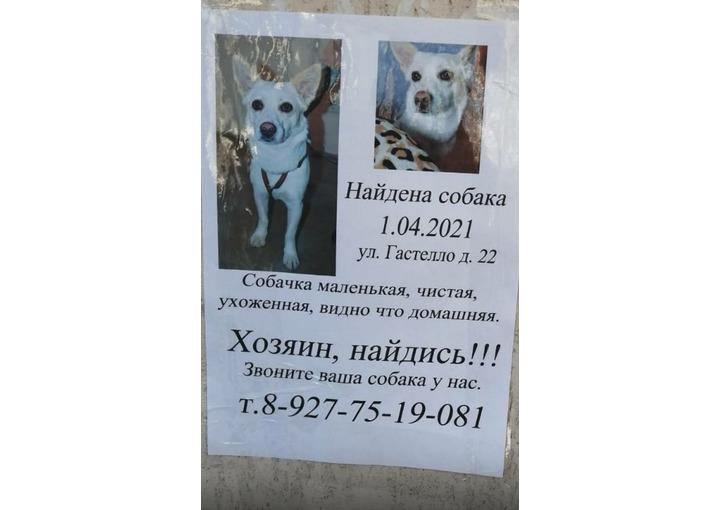 Найдена собака на Гастелло д.22 01.04.2021