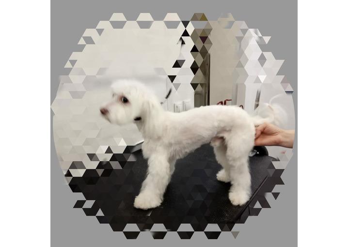 Груминг - стрижка собак и кошек