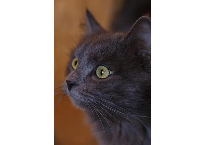 Идеальный кот Изюм